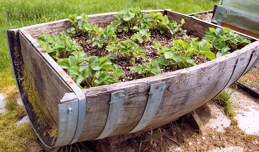 Different ideas to use garden containers CareHomeDecor