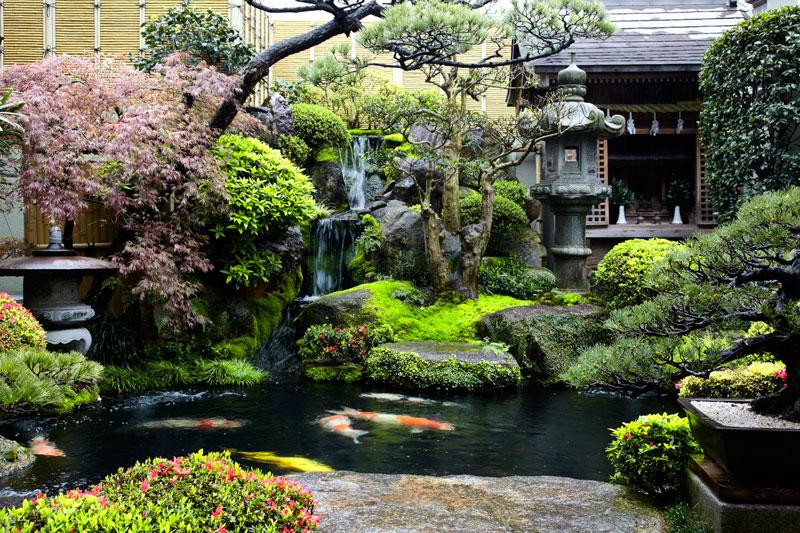 Backyard Garden 24
