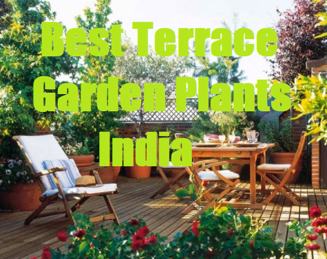 Best terrace garden  84