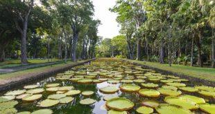 Botanical gardens 80