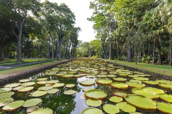 Botanical gardens for plant preservation