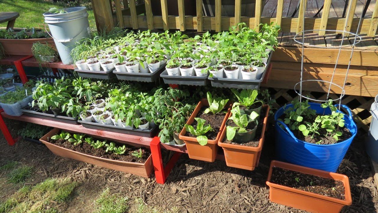 Container garden  07