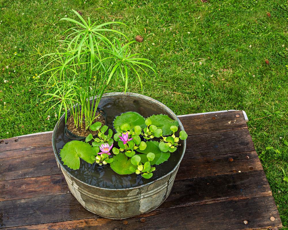 Container garden ideas in the best way