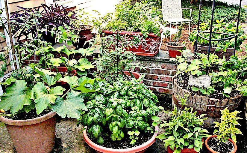 Container Gardening 30