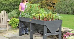 Container Gardening  40