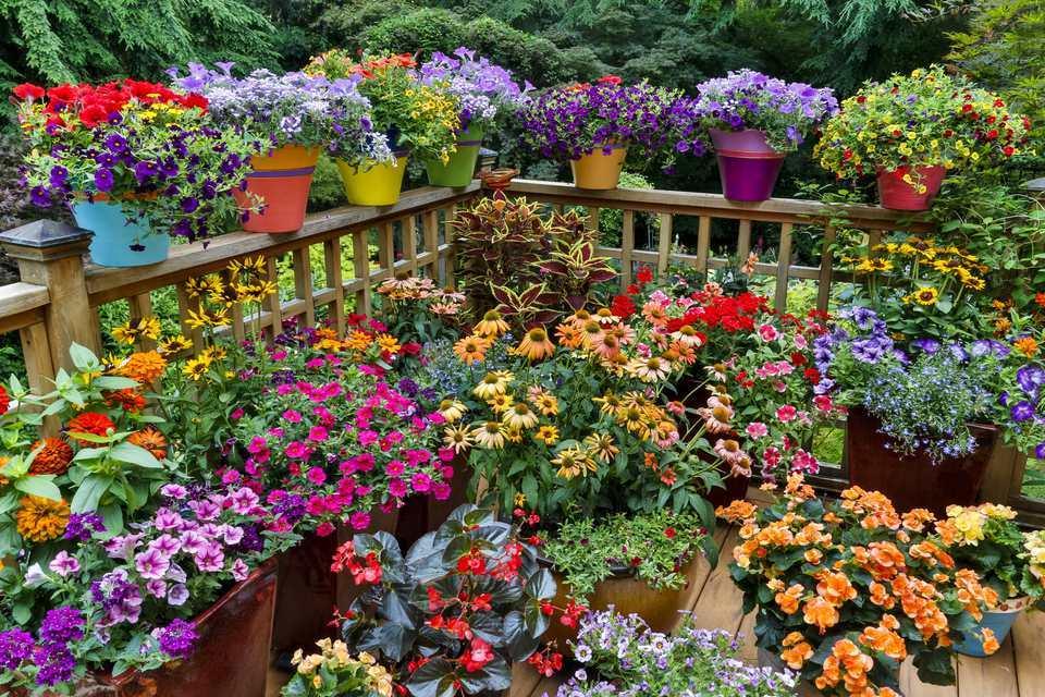 Container Gardening 81