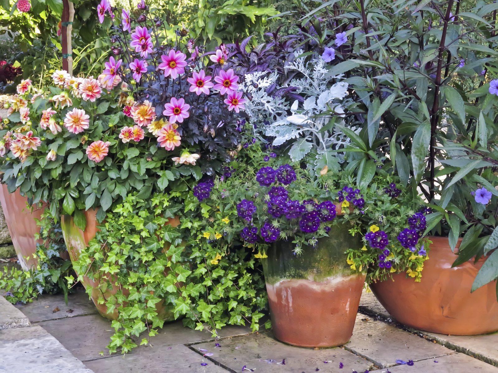 Container Gardening  90