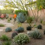 Make your lawn appealing with desert landscaping