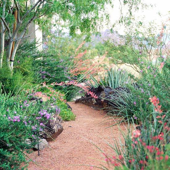 desert landscaping 89