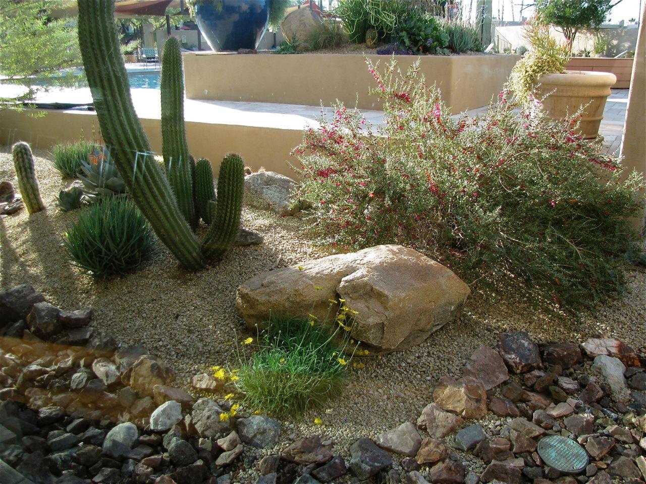 aménagement paysager désertique 92
