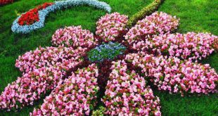 Flower bed designs  84
