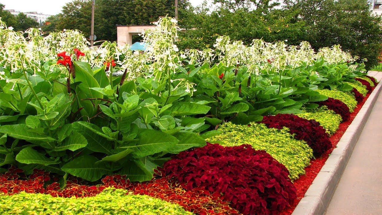 Flower bed ideas  62
