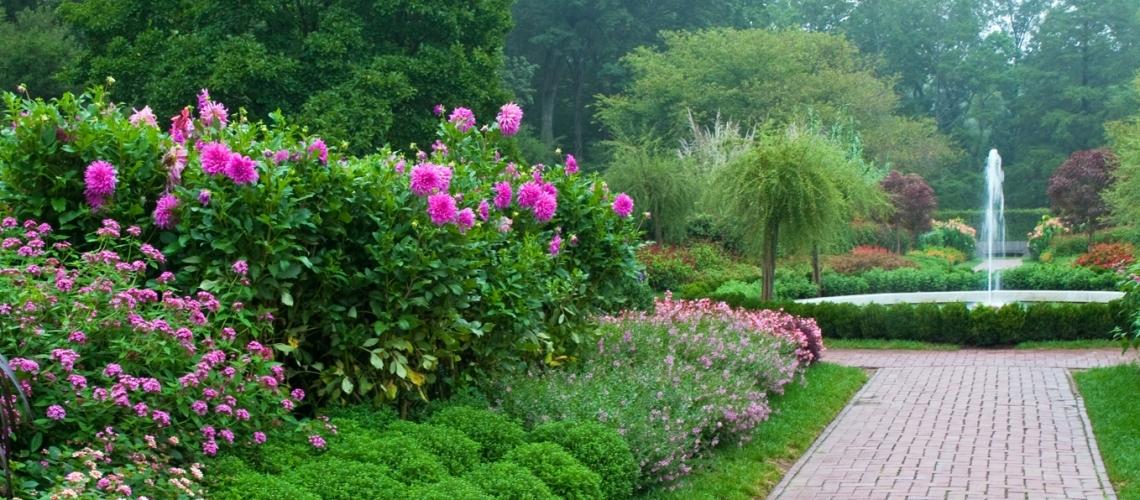 Flower garden  51