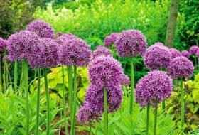 Flower garden  54