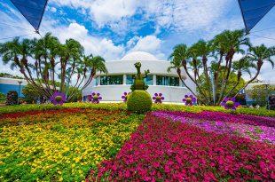 Flower garden  68