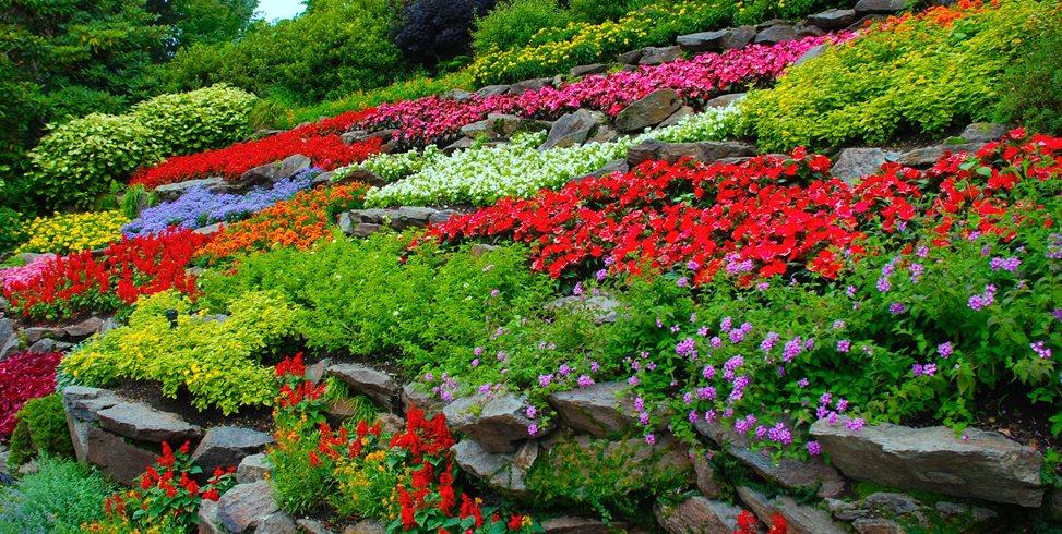 Flower garden  88