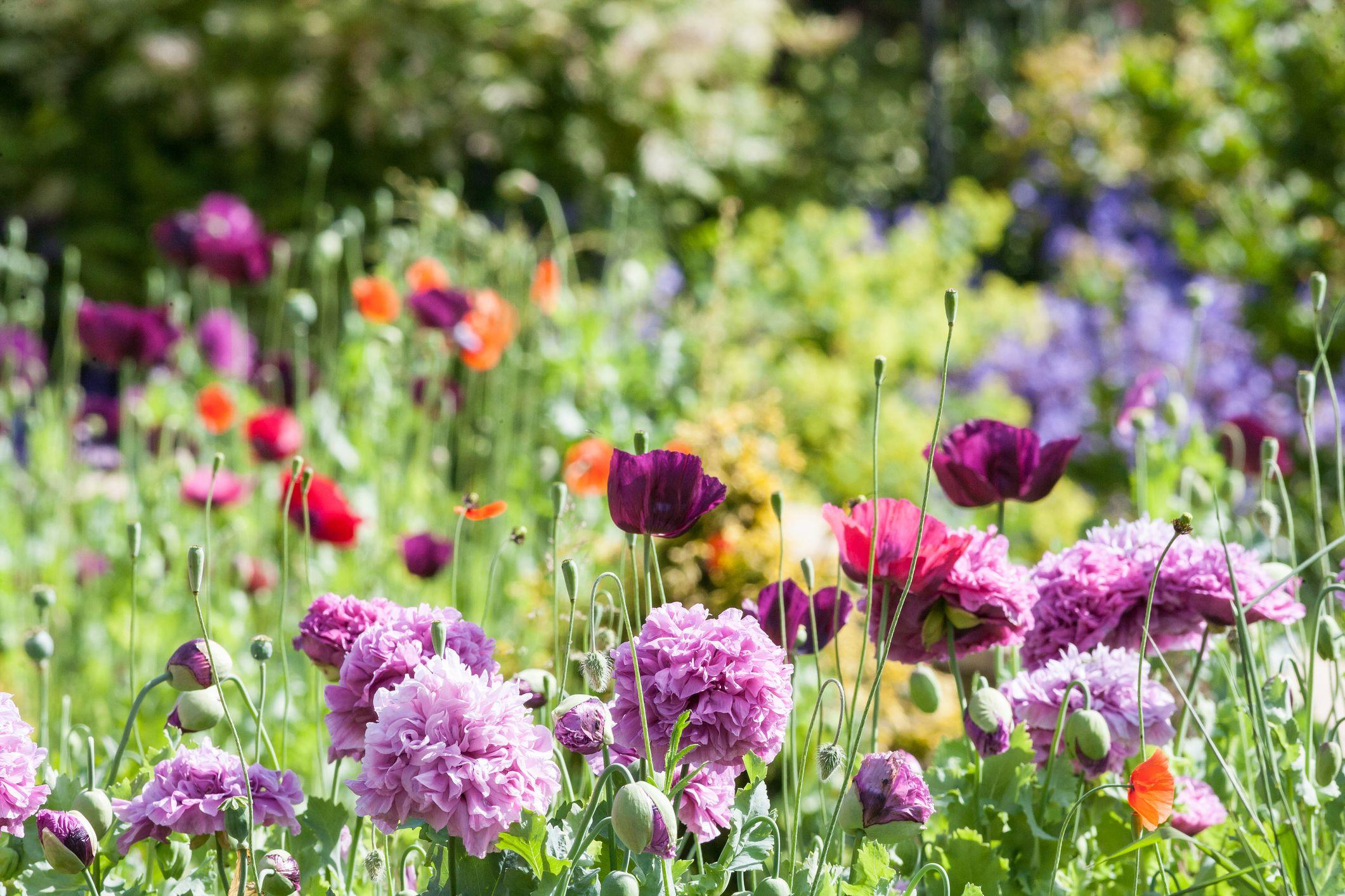 Flower garden  99