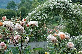 Flower gardens  18