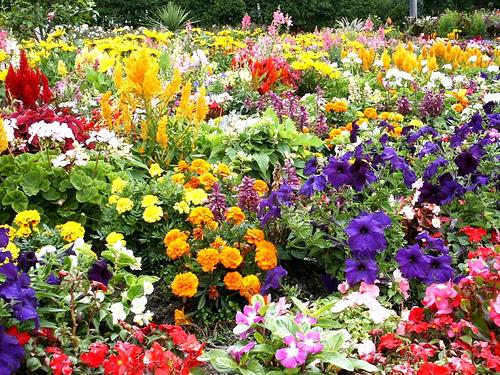 Flower gardens  31