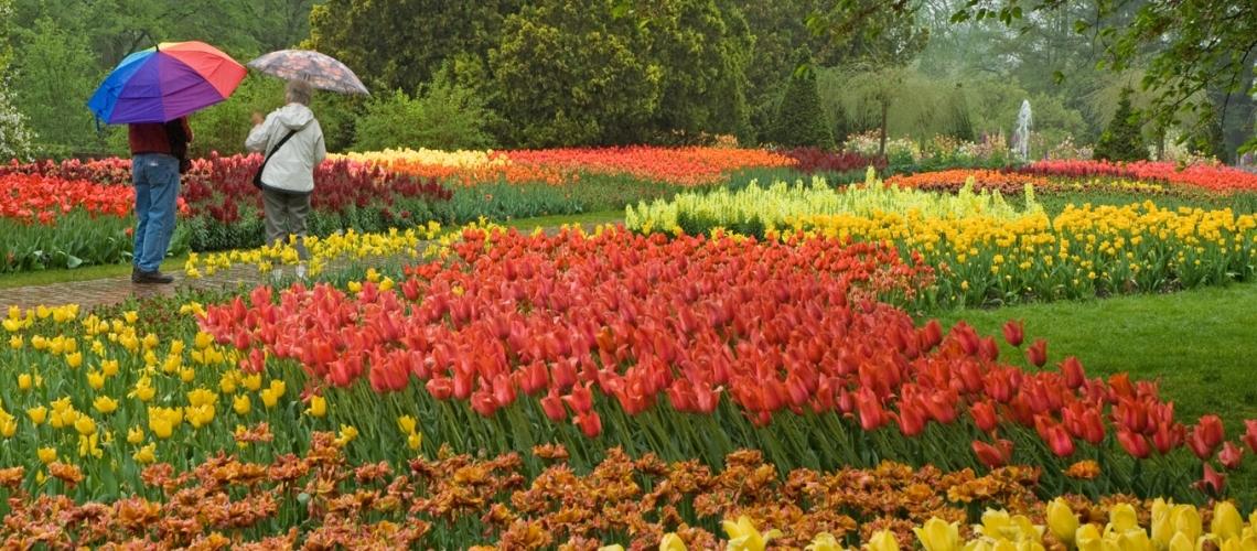 Flower gardens  94