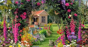 Flower gardens 99