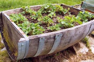 garden containers  01