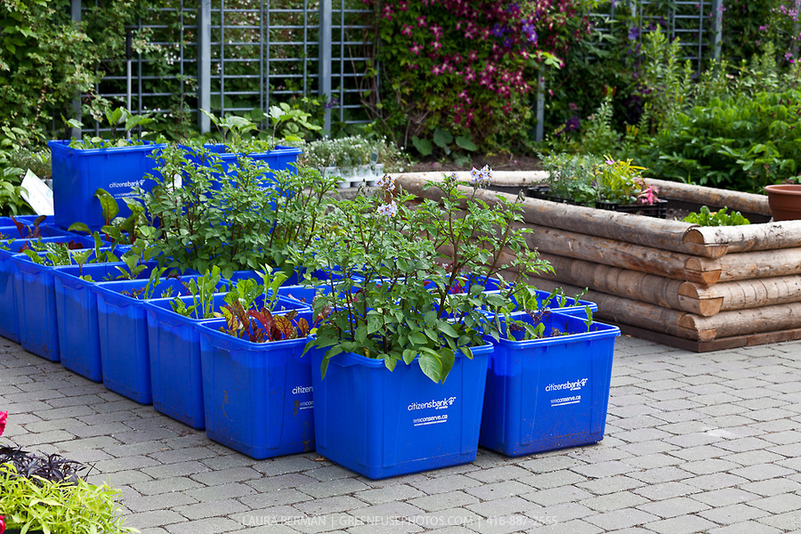 garden containers  50
