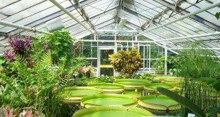 garden greenhouse 80