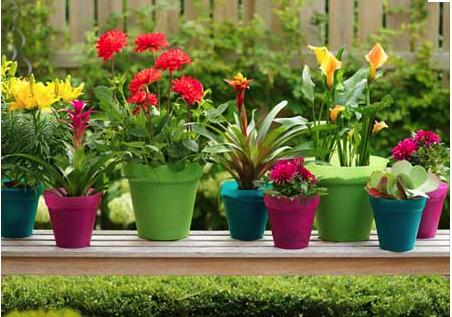 garden pots  59