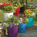 Important things to know before choosing garden pots