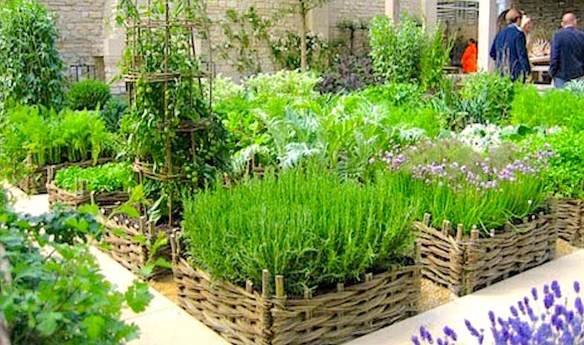 herb garden  06