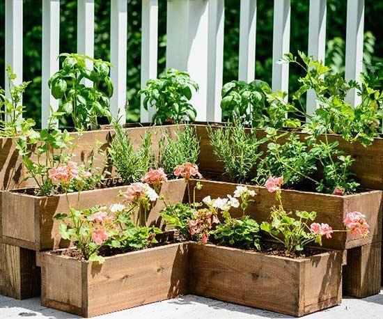 herb garden  08