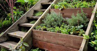 herb garden  41