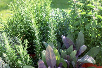 herb garden  59