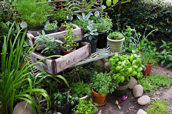 herb garden  61