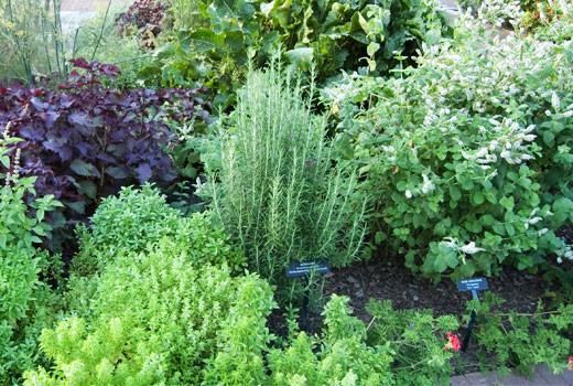 herb garden  86