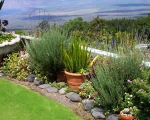 home gardening  12