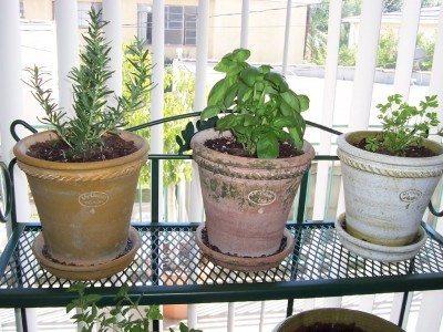 indoor herb garden  37