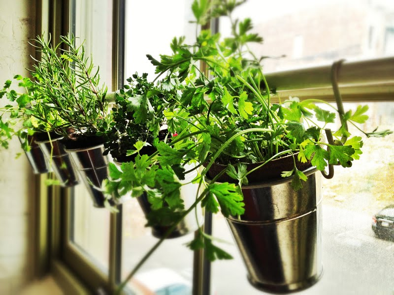 indoor herb garden  58