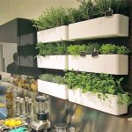 Make your Houses Organic with indoor herb garden
