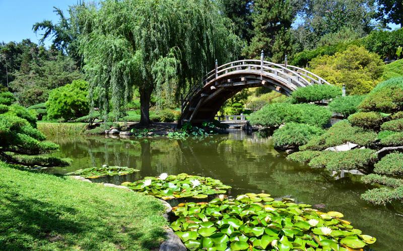 Japanese garden 19