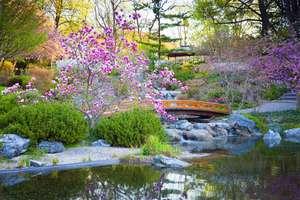 Japanese garden  98