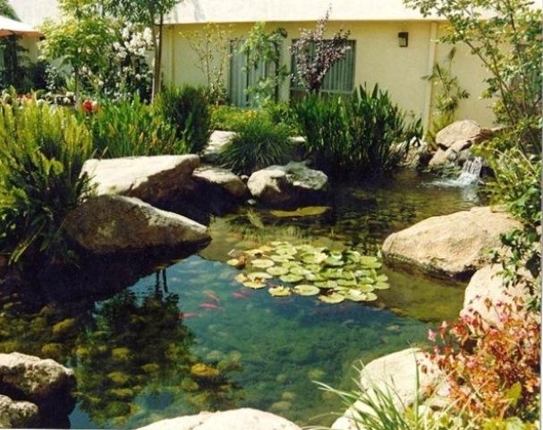 pond designs  53