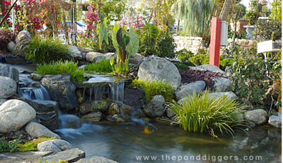 pond designs  73