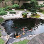 Make your water gardens with trendy pond designs