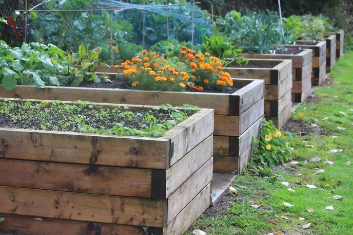 Raised Bed Garden  48