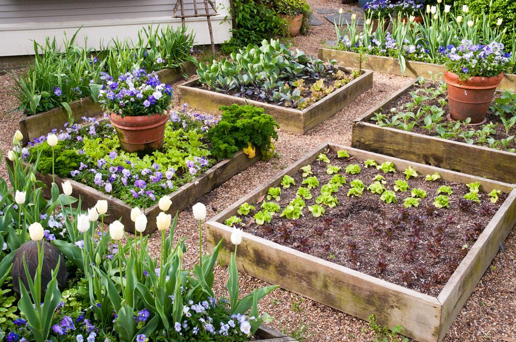 Raised Bed Garden  83