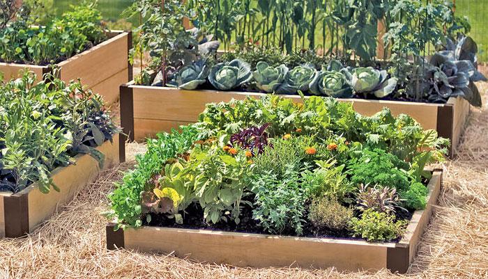 Raised Bed Garden  97