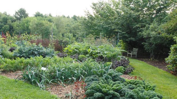 vegetable garden  35