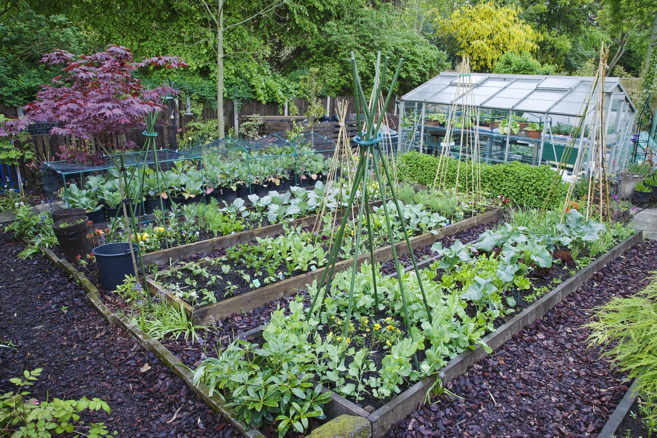 Best vegetable garden ideas for you - CareHomeDecor